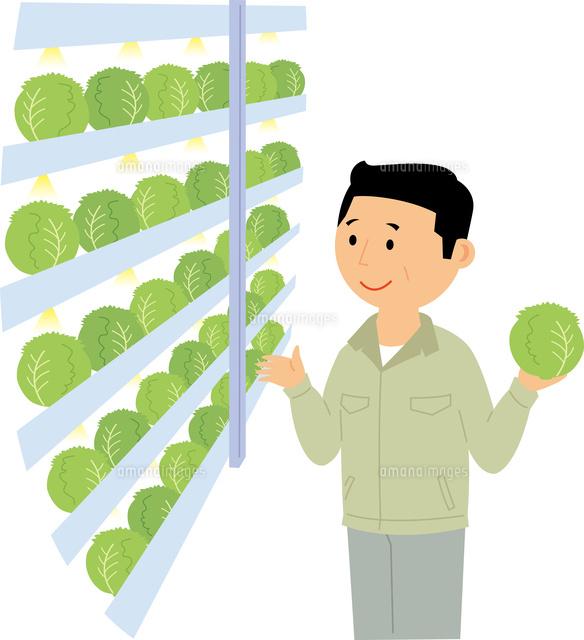 工場で生産する野菜60008000488の写真素材イラスト素材アマナ