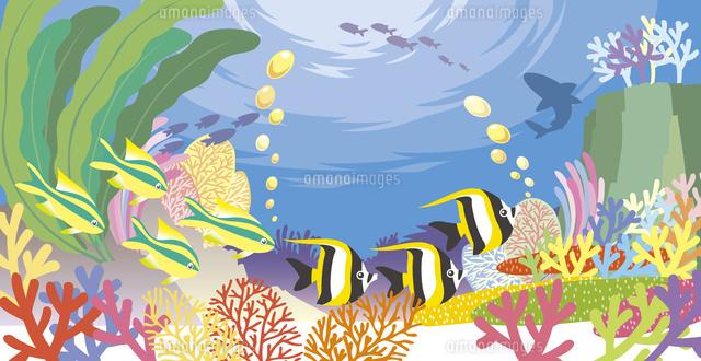 色とりどりなサンゴや海藻の中を泳ぐ南の海の魚達60035000003の写真