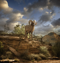 Ram on rock formation in desert