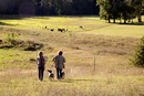 Couple walking dogs in rural landscape