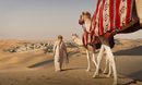 Middle Eastern man walking camels in desert