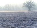 Tree and field covered in frost