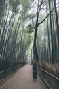 High angle view of woman standing on road amidst bamboo grove during rainfall