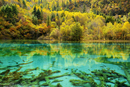 Five Flower Lake in autumnal environment, Jiuzhaigou