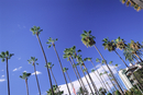 Palm trees, Beverly Hills, Los Angeles, California, USA