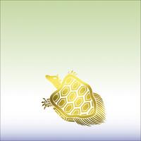 亀 10131018614| 写真素材・ストックフォト・画像・イラスト素材|アマナイメージズ