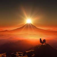 富士山の日の出を見るニワトリ 10185002166| 写真素材・ストックフォト・画像・イラスト素材|アマナイメージズ