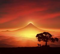 富士山の日の出と犬のシルエット 10185002539| 写真素材・ストックフォト・画像・イラスト素材|アマナイメージズ