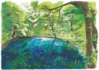 神秘的な空気につつまれる十二湖青池 10822000039| 写真素材・ストックフォト・画像・イラスト素材|アマナイメージズ