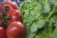 Close up of lettuce and vine tomatoes being washed 11015253551| 写真素材・ストックフォト・画像・イラスト素材|アマナイメージズ