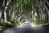 Diminishing perspective of The Dark Hedges - beech tree lined road, Ballymoney, County Antrim, Ireland, UK
