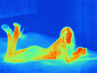 Thermal image of young woman, nude, lying on front