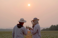 Male and female beekeepers inspecting plant in flower field at dusk, Ural, Russia 11015297709| 写真素材・ストックフォト・画像・イラスト素材|アマナイメージズ