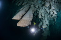 "Scuba diver exploring unique natural formations known as ""bells"" in submerged caves beneath the jungle 11015316344