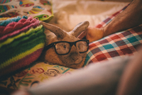 Portrait of pet rabbit, wearing glasses, sitting on cushion