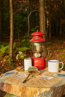 Playing cards, tinned sardines and tin cup on tree stump, Colgate Lake Wild Forest, Catskill Park, New York State, USA 11015329969| 写真素材・ストックフォト・画像・イラスト素材|アマナイメージズ