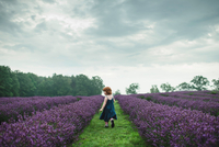 Toddler between rows of lavender, Campbellcroft, Canada 11015334842| 写真素材・ストックフォト・画像・イラスト素材|アマナイメージズ