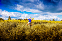 Father carrying son on shoulders, walking through filed of sunflowers,  rear view, Ural, Sverdlovsk, Russia, Europe 11015335261| 写真素材・ストックフォト・画像・イラスト素材|アマナイメージズ