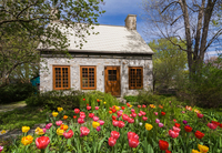 Canadian style fieldstone house, facade, with brown stained wooden windows and door, tulips growing in garden, Quebec, Canada 11015340607| 写真素材・ストックフォト・画像・イラスト素材|アマナイメージズ