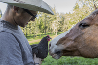 Caucasian farmer holding chicken face to face with horse 11018080133| 写真素材・ストックフォト・画像・イラスト素材|アマナイメージズ