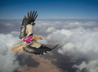 Woman riding eagle flying over clouds in sky 11018087662| 写真素材・ストックフォト・画像・イラスト素材|アマナイメージズ