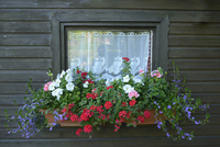 Close-up of Summerhouse Window with Flowers in Early Summer, Bavaria, Germany 11030044602| 写真素材・ストックフォト・画像・イラスト素材|アマナイメージズ