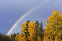 Rainbow and Mixed Forest in Autumn, Grand Teton National Park, Jackson, Wyoming, USA 11030048547| 写真素材・ストックフォト・画像・イラスト素材|アマナイメージズ