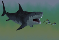 Several Tuna fish try to escape from a huge Megalodon shark. 11079021641| 写真素材・ストックフォト・画像・イラスト素材|アマナイメージズ