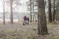 Senior couple enjoying a walk in the woods with their dogs. 11082001623| 写真素材・ストックフォト・画像・イラスト素材|アマナイメージズ