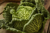 Still life close up fresh, organic, healthy green savoy cabbage, texture, pattern