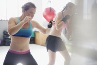 Determined female boxers shadowboxing in gym 11086036300| 写真素材・ストックフォト・画像・イラスト素材|アマナイメージズ