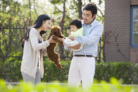 Happy young family with their pet dog 11091020976| 写真素材・ストックフォト・画像・イラスト素材|アマナイメージズ