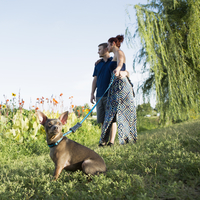 A couple in the park with a small dog on a blue lead. 11093003359| 写真素材・ストックフォト・画像・イラスト素材|アマナイメージズ