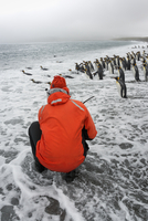 Person taking pictures of a small colony of King Penguins on a beach in South Georgia. 11093005898| 写真素材・ストックフォト・画像・イラスト素材|アマナイメージズ