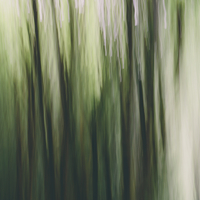 Blurred motion. A forest of Alder trees in Olympic National Park 11093009319| 写真素材・ストックフォト・画像・イラスト素材|アマナイメージズ