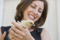 A woman holding a small fluffy chick, a baby bird in her two hands. 11093018852| 写真素材・ストックフォト・画像・イラスト素材|アマナイメージズ