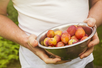Close up of person standing outdoors, holding metal bowl with fresh yellow and red plums. 11093022404| 写真素材・ストックフォト・画像・イラスト素材|アマナイメージズ