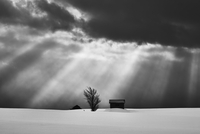 Snow-covered winter landscape under a dramatic sky, with two small houses and solitary tree in the distance, Biei. 11093022729| 写真素材・ストックフォト・画像・イラスト素材|アマナイメージズ