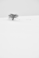 Snow-covered winter landscape with solitary tree in the distance, Biei. 11093022741| 写真素材・ストックフォト・画像・イラスト素材|アマナイメージズ