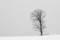 Snow-covered winter landscape with solitary tree in the mid-distance, Biei. 11093022743| 写真素材・ストックフォト・画像・イラスト素材|アマナイメージズ