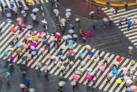 High angle view of large group of pedestrians carrying umbrellas crossing urban street. 11093023162| 写真素材・ストックフォト・画像・イラスト素材|アマナイメージズ