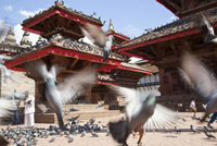 Open courtyard with Buddhist temples, large group of pigeons. 11093023217| 写真素材・ストックフォト・画像・イラスト素材|アマナイメージズ