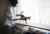 Woman indoors, holding calico cat with white, black and brown fur walking along a shelf. 11093023773| 写真素材・ストックフォト・画像・イラスト素材|アマナイメージズ