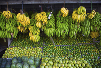 Outdoor market scene, close up of market stall with selection of green fruits, including bananas, mangoes and melons. 11093024839| 写真素材・ストックフォト・画像・イラスト素材|アマナイメージズ