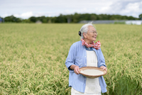 Smiling elderly woman with grey hair standing in a rice field, holding bowl with freshly harvested rice grains.