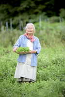 Elderly woman with grey hair standing in a garden, holding basket with fresh vegetables, smiling at camera. 11093025176| 写真素材・ストックフォト・画像・イラスト素材|アマナイメージズ