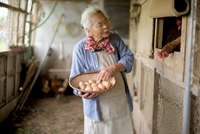 Elderly woman with grey hair standing in a chicken house, holding basket, collecting fresh eggs. 11093025188| 写真素材・ストックフォト・画像・イラスト素材|アマナイメージズ