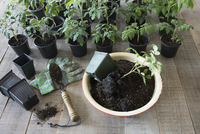 Still life of seedlings and soil in flowerpot