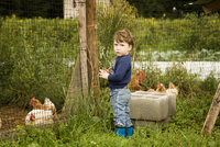 Toddler playing with chickens 11100005264| 写真素材・ストックフォト・画像・イラスト素材|アマナイメージズ