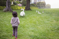 Rear view of boy walking towards swans on grassy field